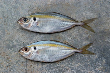 The yellow stripe trevally fish