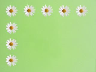 Margerite auf grünem Hintergrund 4