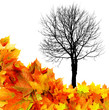 black tree silhouette and autumn leaves