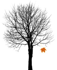 tree silhouette and one autumn leaf