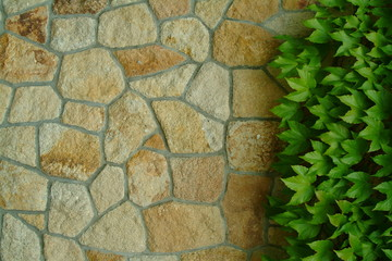 wall with green leafs