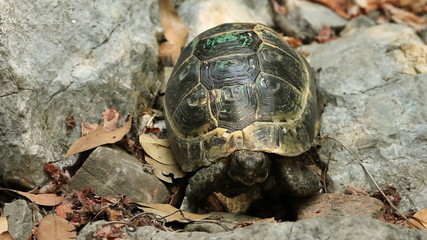 Single Turtle in the forest