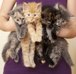 Woman Holding 4 Kittens