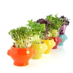 Fresh garden cress in colorful crockery