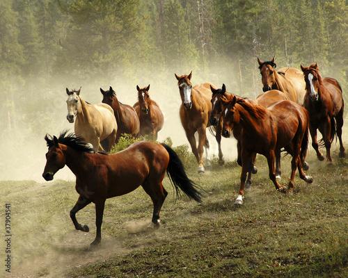 In de dag Paarden Running Horses