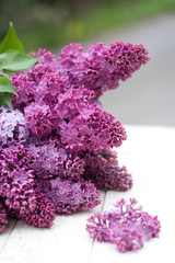 Fliederzweige in violett