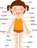 Fototapety vocabulary part of body