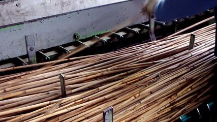 cane in the machine