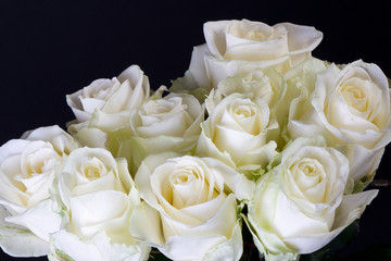 Bouquet of white roses (Hybrid Tea) over black