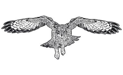 Eule fliegend