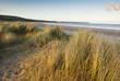grass on sandy beach, pembrokeshire, wales