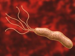helico bacter -  Magenbakterium