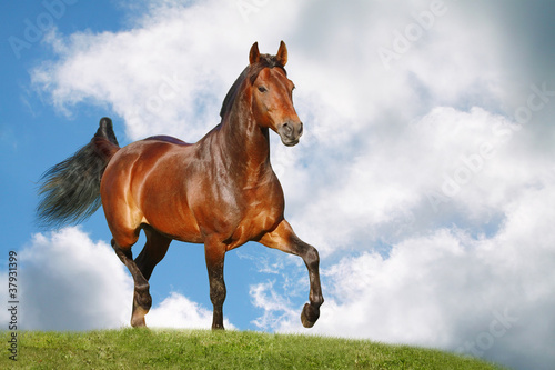 Sticker horse in field