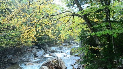 Autumn brook in New Hampshire