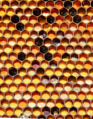 Pollen and ambrosia