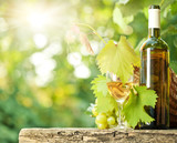 Fototapety White wine bottle, vine, glass and bunch of grapes
