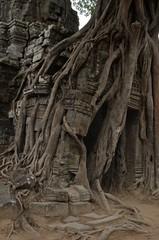 Angkor wat jungle temple