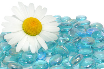 Beautiful Daisy Flower on Blue Glass Stones with Copy Space