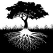 Tree roots silhouette - 37977176