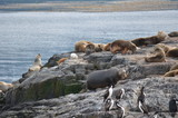 Colony of seals and cormorans