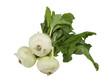 fresh white kohlrabi on a white background