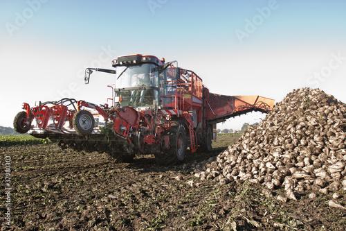 Fototapeten,rüben,zuckerrübe,landwirtschaft,feldarbeiter
