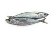 two mackerel - due sgombri