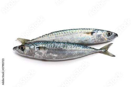 two mackerel - due sgombri