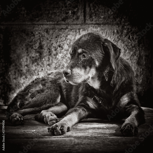 Dramatic image of a sad abandoned dog