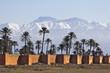 neige et palmiers - 37995775