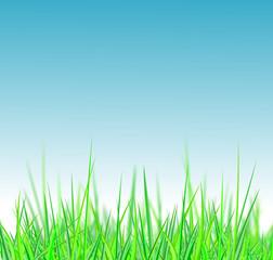 Grüne Wiese mit blauem Himmel