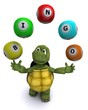 tortoise with bingo balls