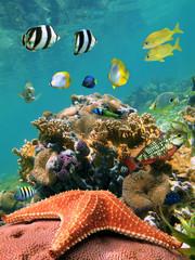 Sea-star and fish