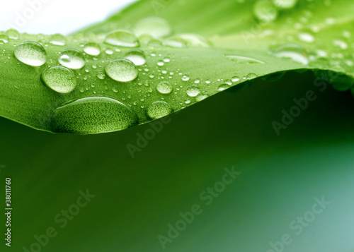 Leinwandbild Motiv Plant