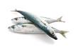 three mackerel - tre sgombri