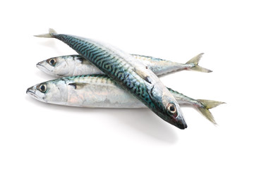 three mackerel - tre sgombri