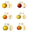 Grafiken alte Apfelsorten,