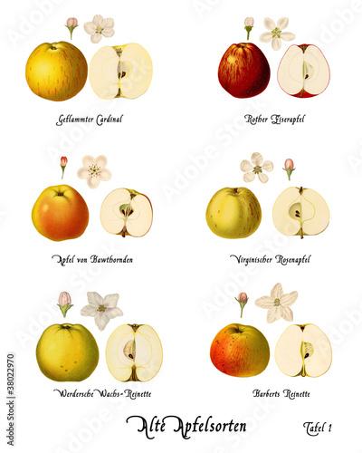 Collage Alte Apfelsorten, Tafel 1
