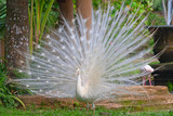 Fototapeta przyciągnięcie - atrakcja - Ptak