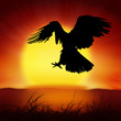 silhouette of eagle with big sun background