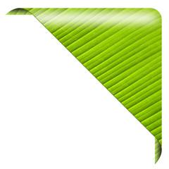 Grüner Ökobutton ecke, blank