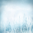 Winter  nature background with frozen grass