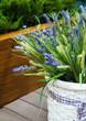 basket of lavender