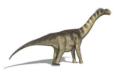 Camarasaurus Dinosaur