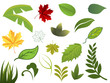 Set of different leafs. Vector illustration.