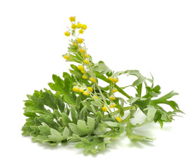 Wormwood with Flowers Isolated on White Background