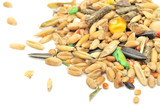 Rodent Food Mix of Grains and Seeds Close-Up poster