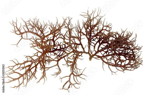 Poster Water planten fresh dark brown seaweed