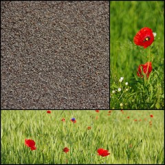 Collage with poppy seeds