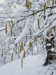 winter detail